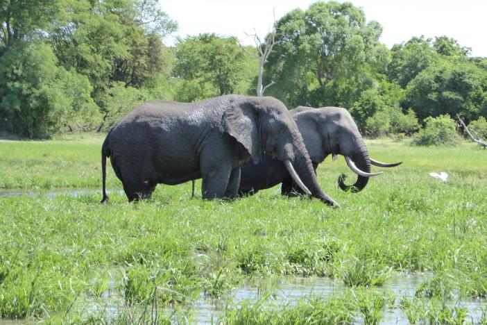 123 Elephant.jpg