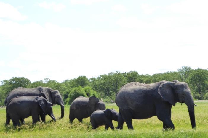 127 Elephant.jpg