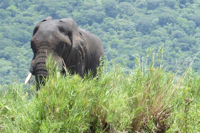 128 Elephant.jpg