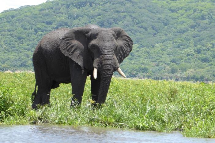 130 Elephant.jpg