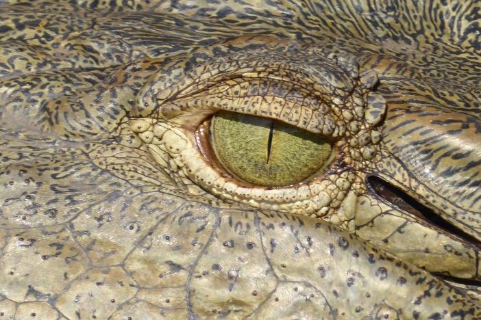 16.Crocodile Eye.jpg