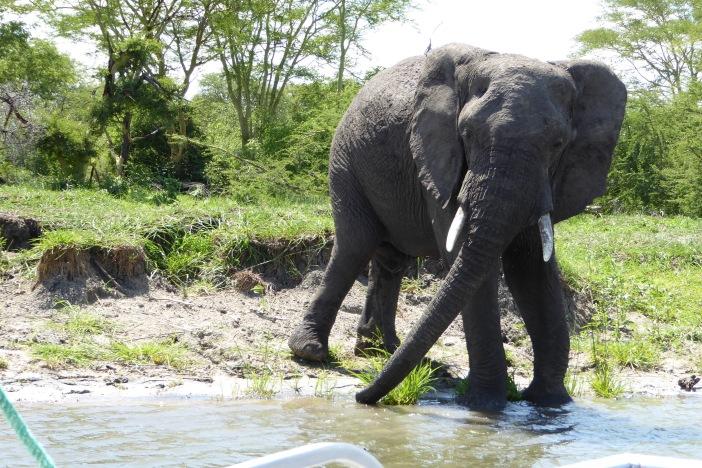 3. Elephant along the way.jpg