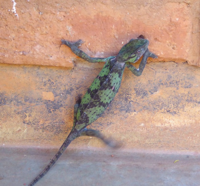 Chameleon 3.jpg