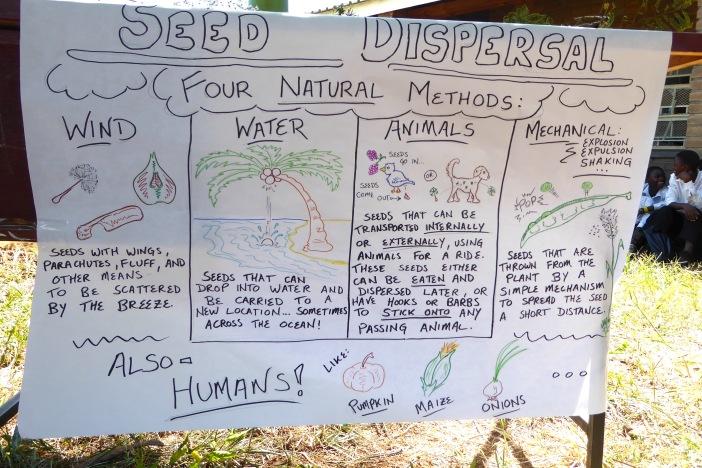 Seed Dispersal.jpg
